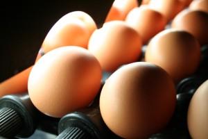 「卵は栄養の宝庫!積極的に摂取しましょう」