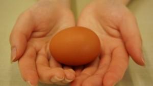 美味しい卵の秘密は鶏たちの管理を徹底しているからです