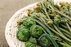 これからが旬!山菜を使用したレシピをご紹介!