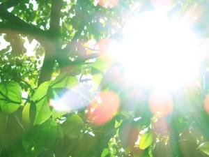 夏前に食事で紫外線から肌を守ろう!卵を使った日焼け対策レシピ!