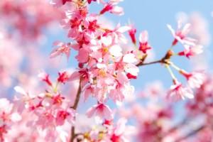 たまごは春が旬って本当?