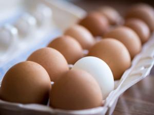 世界の鶏卵価格事情