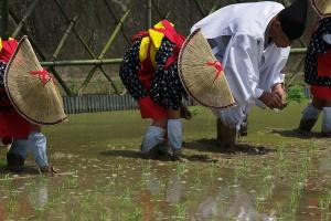 春夏秋冬お米の祭りをご紹介します!
