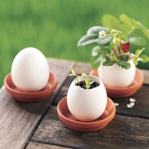 卵を割ってガーデニング?!本物そっくりの卵で室内園芸はじめてみませんか?