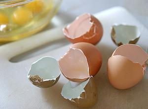 エコな新素材!卵殻の活躍をご紹介!