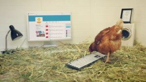 ツイッターを使いこなす鶏、ベティとは何者!?