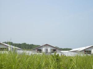 山田ガーデンファームでは暑い夏でも鶏に元気な卵を産んでもらう工夫をしています