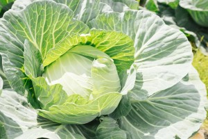 8月31日は「野菜の日」!