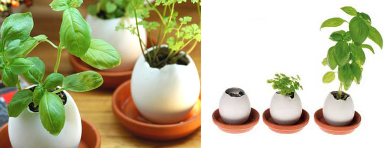 eggling-plant-you-hatch-from-egg-xl