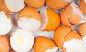 盛り上がりはオリンピック級!?卵を使った世界のユニークな大会