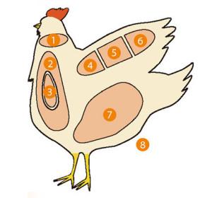 全部知ってたらかなり「肉通」!鶏肉の部位全17種、おいしさと食感