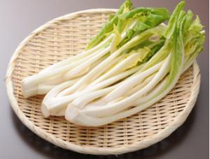 伝統的な栽培方法を受け継いだ雪菜!冬の味覚の雪菜漬けを冬季限定でお取り寄せ!
