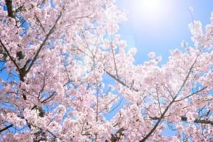 春の訪れを感じる今日この頃