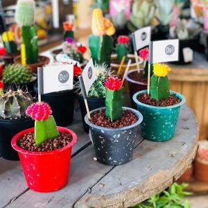 リフレッシュの為にもお部屋で植物を育ててみませんか?