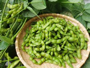 夏にぴったりの「鶴岡産だだちゃ豆」をご紹介します!!