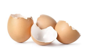 捨てる前に試してほしい!卵の殻の再利用法