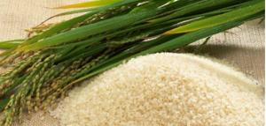 毎月18日は米食の日
