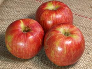 リンゴについての問い合わせにお答えします