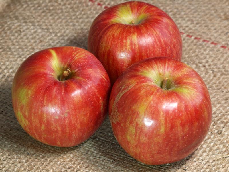 20120917_apple_3097_w800