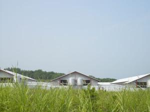 安心・安全なたまごをお届けするために・農場HACCP取得