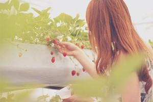 山形で苺狩りはいかがでしょうか?イチゴ狩りスポットをご紹介します!
